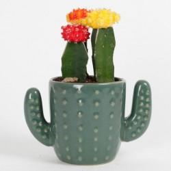 Vasinho para Plantas Suculentas ou Cactus em Formato de Cactus Cerâmica