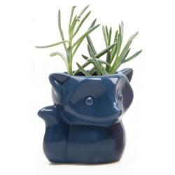 Vasinho Raposa Azul para Plantas Suculentas ou Cactus