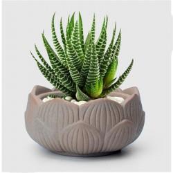 Mini Vaso Fibra de Vidro Folhas para Plantas Suculentas ou Cactus