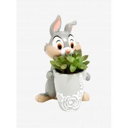 Mini Vaso de Plantas Suculentas Cactus Formato Coelho