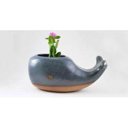 Mini Vaso de Plantas Suculentas Cactus Formato Baleia