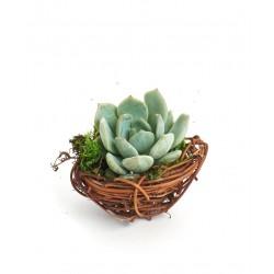 Vasinho Ninho Passarinho para Plantas Suculentas e Cactus