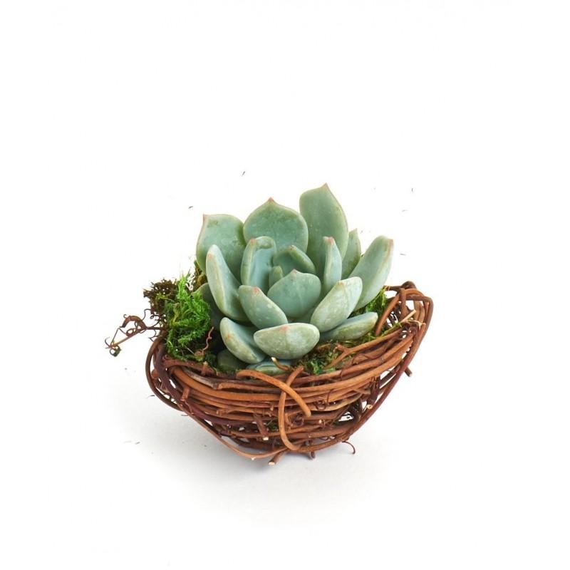 Vasinho Ninho Passarinho para Plantas Suculentas Tipos Cactus Suculenta Flor
