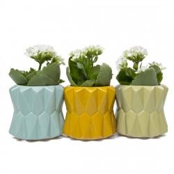 Conjunto de Vasos para Plantas Suculentas e Cactus Coloridos