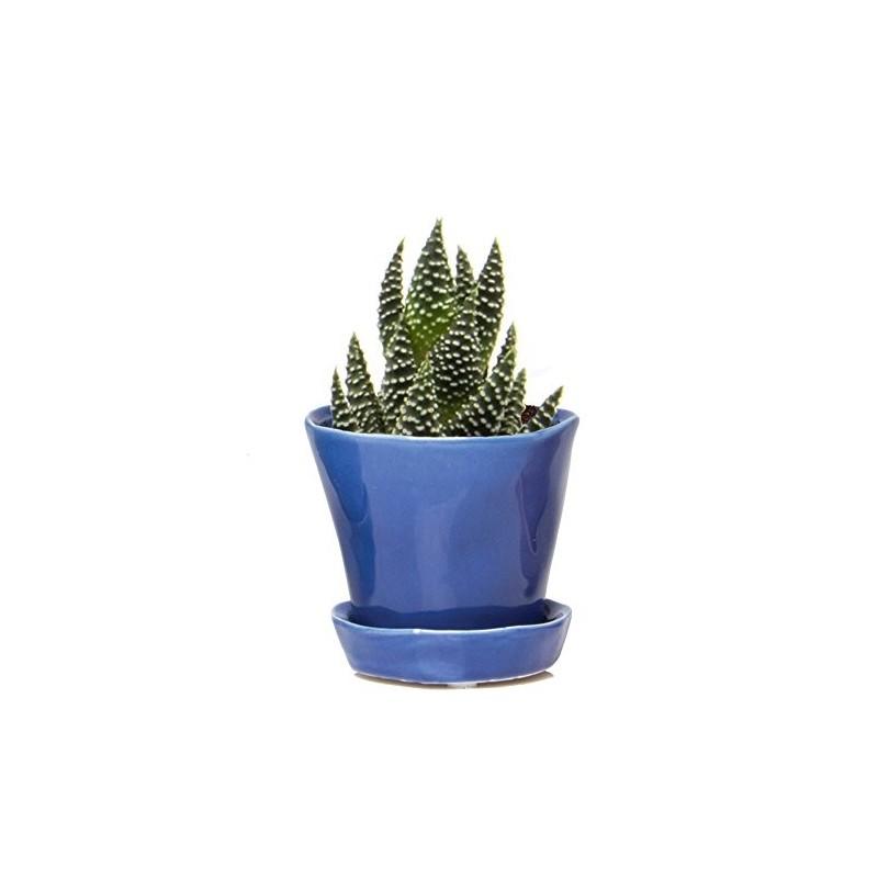 Vaso Cerâmica Azul para Plantas Suculentas e Cactus Flores